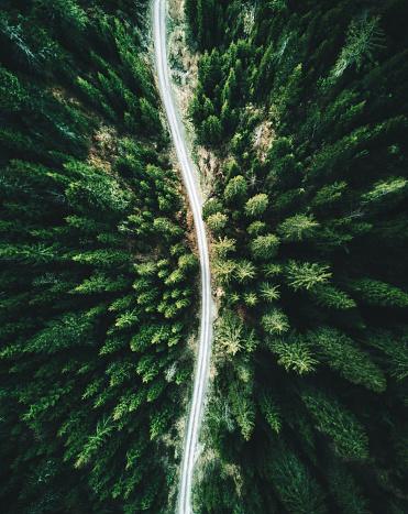 Dirt Road「summer forest aerial view in switzerland」:スマホ壁紙(5)