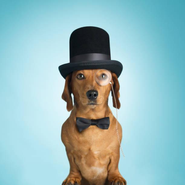 Dachshund wearing top hat and monacle:スマホ壁紙(壁紙.com)