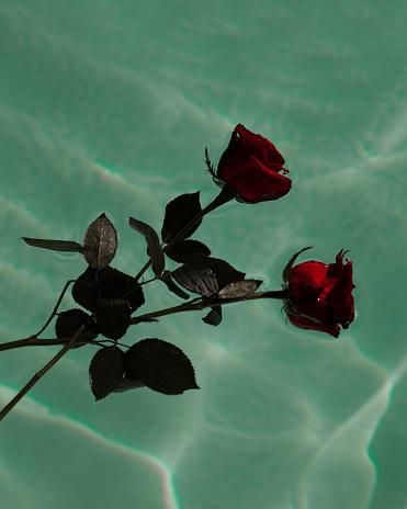 恋愛運「Roses in water」:スマホ壁紙(12)