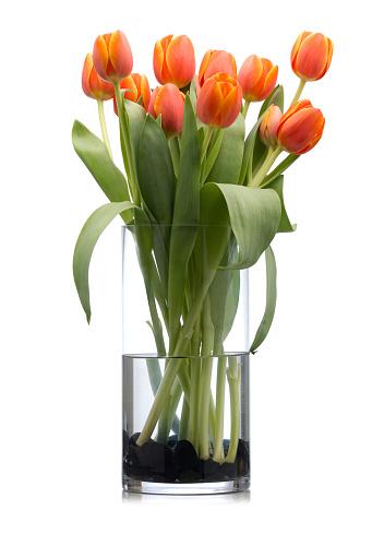 チューリップ「レッドオレンジチューリップクリスタルの花瓶白で分離」:スマホ壁紙(3)