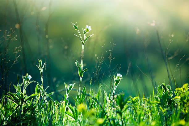 Meadow Wildflowers and grass at sunrise:スマホ壁紙(壁紙.com)