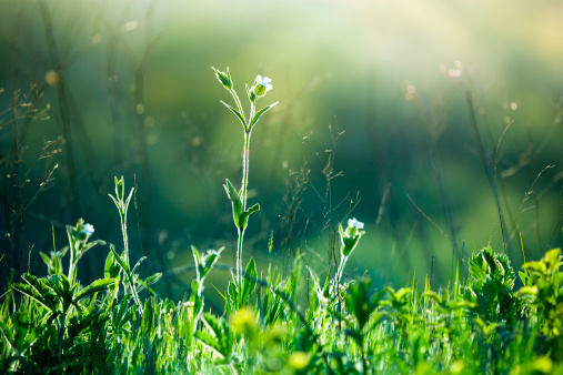 Extreme Close-Up「Meadow Wildflowers and grass at sunrise」:スマホ壁紙(9)