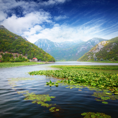 Water Lily「Mountain lake with water lilies plantations」:スマホ壁紙(0)