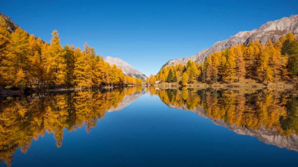 Mountain lake with larch trees in autumn, Preda, Lake Palquognasee, Lai da Palquogna, Albula-Pass, Grisons, Switzerland, European Alps:スマホ壁紙(壁紙.com)