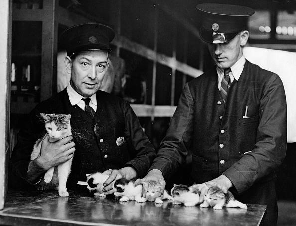 Restraining「The Railway Kittens」:写真・画像(4)[壁紙.com]