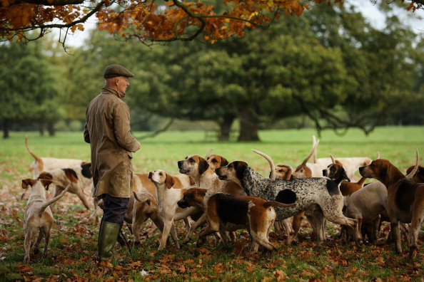 Cheshire - England「Kennels Prepare Their Dogs For The Start Of The Fox Hunting Season」:写真・画像(11)[壁紙.com]