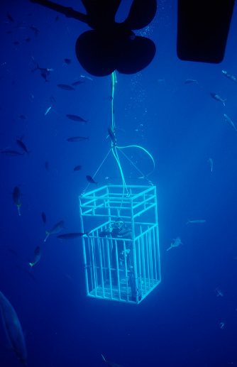 Indigenous Culture「Diver in Shark cages, Mexico, Pacific ocean, Guadalupe」:スマホ壁紙(16)