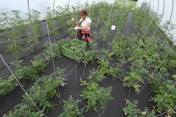 Organic Farmers Profit From EHEC Outbreak:ニュース(壁紙.com)