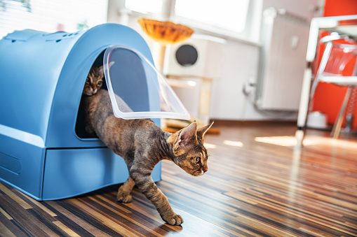 Litter Box「Domestic Cat Stepping Out of Closed Litter Box in Living Room - Stock Photo」:スマホ壁紙(17)