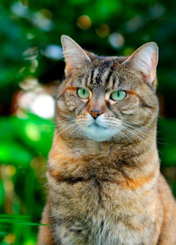 Mixed-Breed Cat「domestic cat Outdoor」:スマホ壁紙(5)