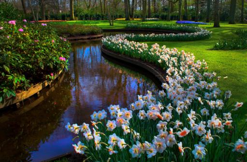 キューケンホフ公園「Daffodils border Creek」:スマホ壁紙(10)