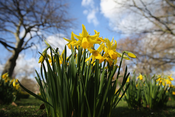 スイセン「Sunny Weather In London Encourages Upcoming Spring Season」:写真・画像(13)[壁紙.com]