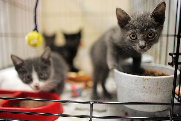 子猫「New Orleans Wrestles With Homeless Pets After Katrina」:写真・画像(4)[壁紙.com]