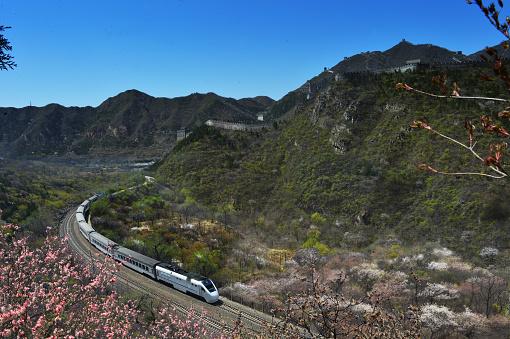 桜「Train bound for spring」:スマホ壁紙(18)