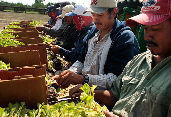 Planting「Tobacco Farmers Fear That Flu Threat Will Hinder Seasonal Labor Migration」:写真・画像(16)[壁紙.com]