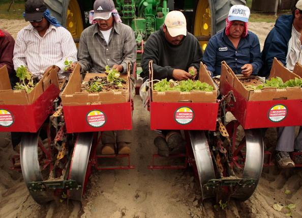 Planting「Tobacco Farmers Fear That Flu Threat Will Hinder Seasonal Labor Migration」:写真・画像(17)[壁紙.com]