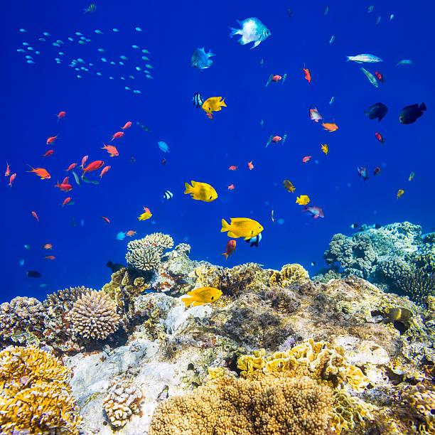 Colorful tropical fish on Red sea:スマホ壁紙(壁紙.com)