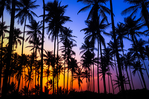 Bahamas「Colorful tropical coconut trees at sunrise」:スマホ壁紙(16)