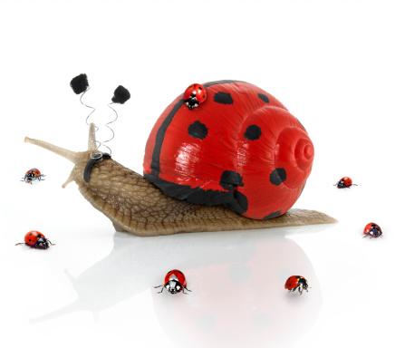 カタツムリ「Ladybugsnail 」:スマホ壁紙(12)