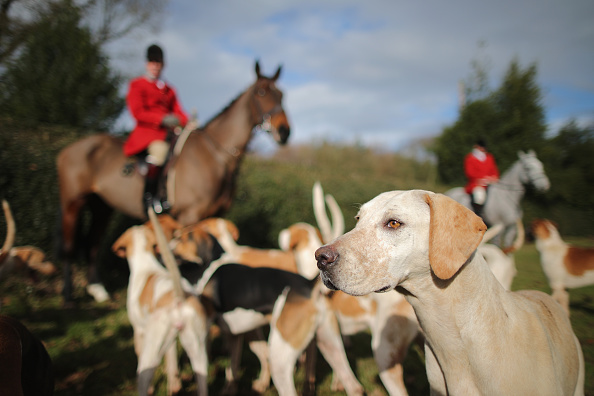 Cheshire - England「The Cheshire Forest Hunt Ride Out On The Tenth Anniversary Of the Hunting Ban Law」:写真・画像(16)[壁紙.com]