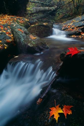 Maple Leaf「Stream in Shenandoah National Park, Virginia  」:スマホ壁紙(9)