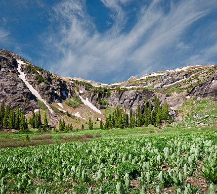 Corn Lilly「Meadow at Lower Ice Lakes Basin」:スマホ壁紙(11)