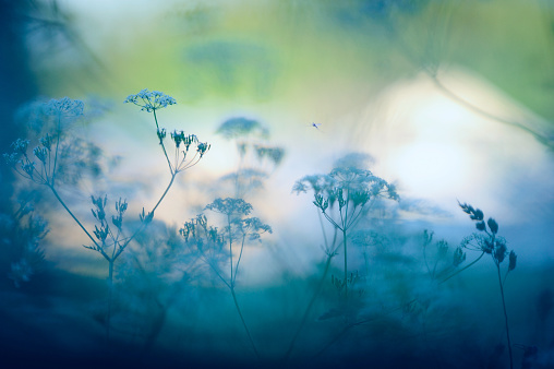 虫・昆虫「Meadow の花」:スマホ壁紙(15)