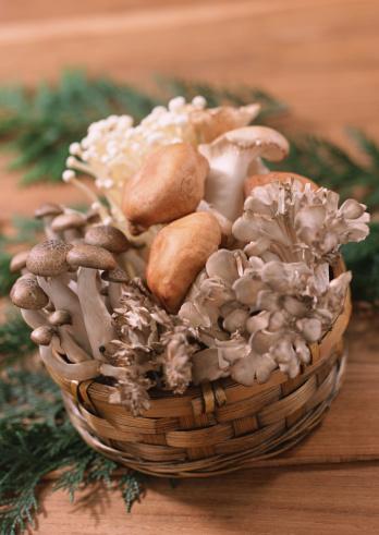 シイタケ「Mushroom」:スマホ壁紙(10)