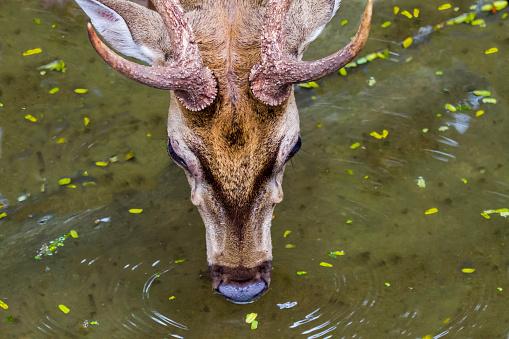Dethan Punalur「Thirsty deer」:スマホ壁紙(14)