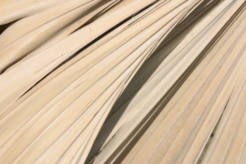 Frond「Palm leaves texture」:スマホ壁紙(15)