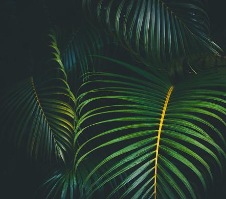 Tropical Tree「Palm leaves background」:スマホ壁紙(13)