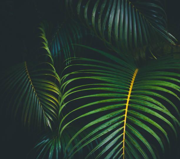 Palm leaves background:スマホ壁紙(壁紙.com)