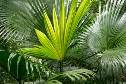 Frond「Palm Leaves」:スマホ壁紙(18)
