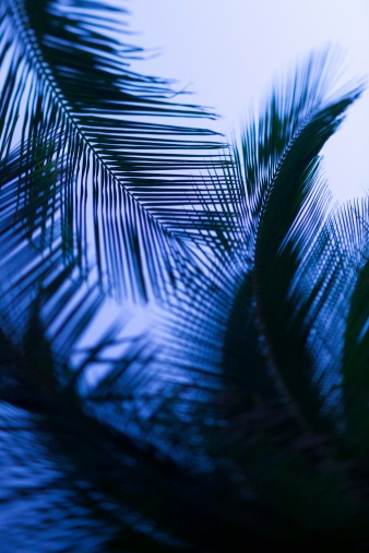 Frond「Palm leaves silhouetted against sky」:スマホ壁紙(1)