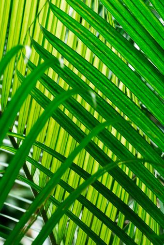 Frond「Palm Leaves」:スマホ壁紙(1)