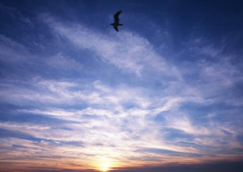 Image processing filter「Sunset」:スマホ壁紙(12)