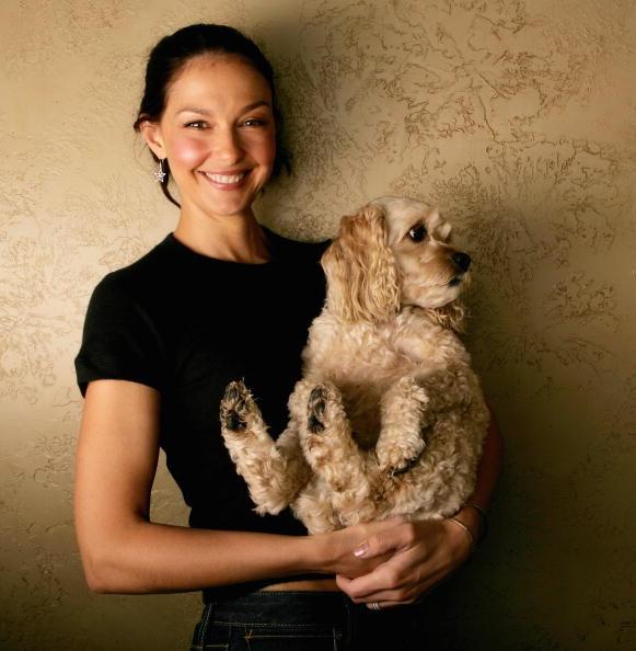"Pet Owner「""Come Early Morning"" Sundance Portrait Session」:写真・画像(0)[壁紙.com]"