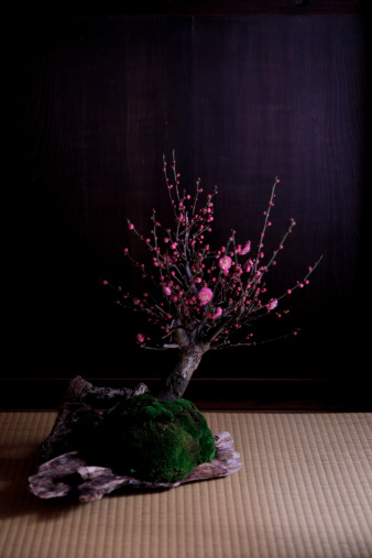 梅「Bonsai of Japanese plum」:スマホ壁紙(10)