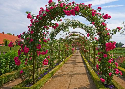 Ornamental Garden「Rose archway」:スマホ壁紙(2)