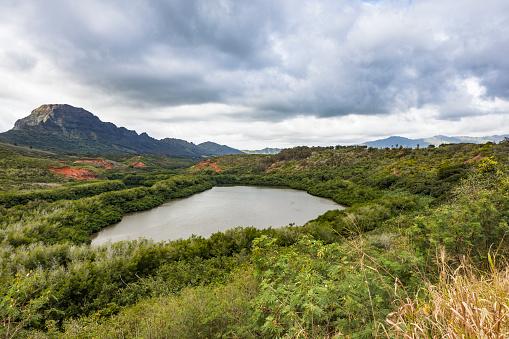 Carp「fish pond kauai island, hawaii islands」:スマホ壁紙(14)