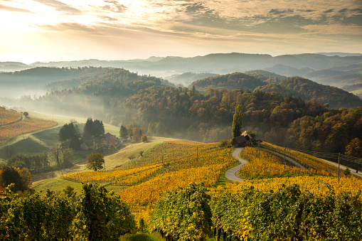 Slovenia「View of green mountains.  Heart among Vineyards」:スマホ壁紙(11)