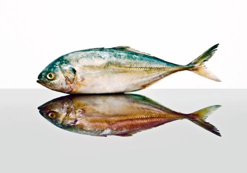 Pollock - Fish「Pollock fish」:スマホ壁紙(5)