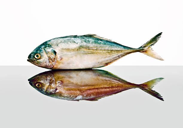 Pollock fish:スマホ壁紙(壁紙.com)