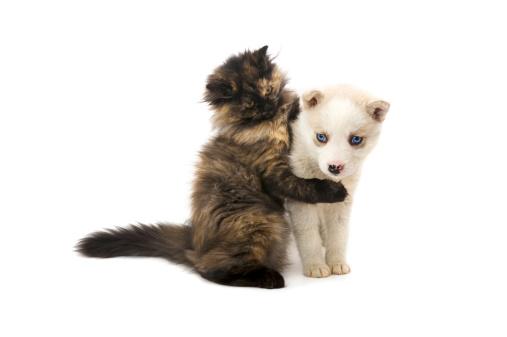 Kitten「go don'ください。」:スマホ壁紙(18)