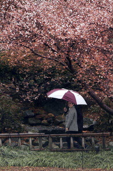 桜「Scientists Predict 2007 Will Be Warmest Year Yet」:写真・画像(12)[壁紙.com]