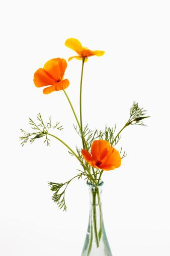 繊細「Flowerpot of gold poppy flowers against white background, close up」:スマホ壁紙(12)