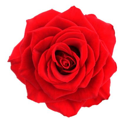 Floral Pattern「Rose.」:スマホ壁紙(7)