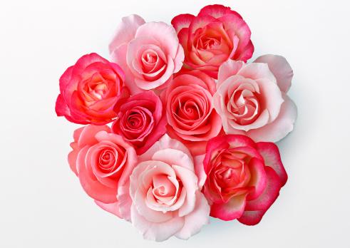薔薇「Rose」:スマホ壁紙(11)