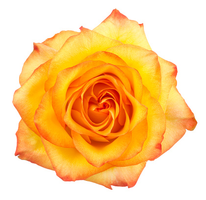 Floral Pattern「Rose.」:スマホ壁紙(6)
