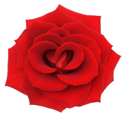 薔薇「ローズます。」:スマホ壁紙(11)